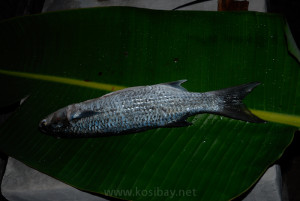 eat your catch at accommodation in kosi bay
